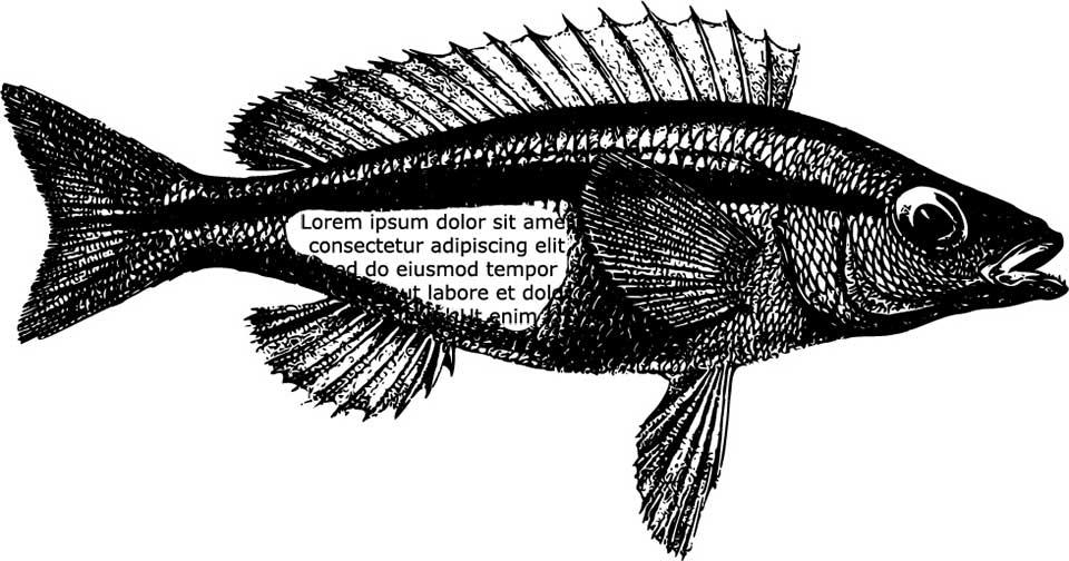 Рыба в тексте